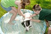 Young kids washing dog in kiddie pool