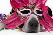 dog looking tired in feather mask