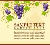 pic of grape-vine  - Vector grape ornament - JPG