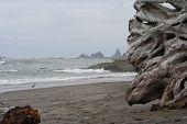Enormous Driftwood On Beach