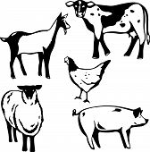 Barnyard Animals poster