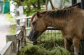 The Horse It Is An Odd-toed Ungulate Mammal Belonging To The Taxonomic Family Equidae. poster