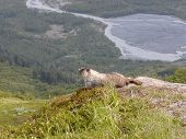 Marmot With A View