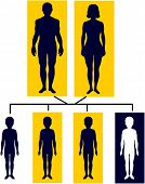 Inheriting Sickle Cell Genes