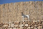 A dog near wooden fence