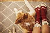Festive Socks On Girl Legs And Cute Golden Dog Sitting On Floor In Festive Room. Relax Time. Cozy Wi poster