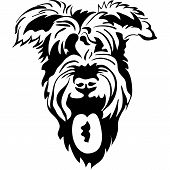 Vector Sketch Of Purebred Dogs Schnauzer poster