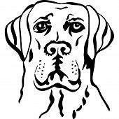 Vector Sketch Dog Breed Labrador Retrievers
