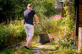 Gardener With Electric Lawn Mower Is Trimming The Garden. Sunny Day, Blooming Garden. Adult Man Prun poster