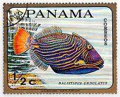 PANAMA - CIRCA 1978: A stamp printed in Panama shows tropical reef fish Balistipus Undulatus, circa 1978
