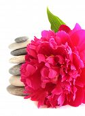 Pink peony and stones, isolated on white