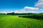 Plantation In  Bavaria