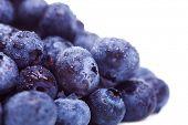 Makro-Bild von einem Haufen von frischen Heidelbeeren Früchte mit Wasser Tropfen auf Sie