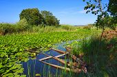 Beautiful landscape of a lake with green vegetation and typical boats in Pateira de Fermentelos, Por