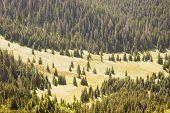 Meadow In Polish Tatra Mountains poster