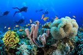 stock photo of sea fish  - Scuba Diving over Coral Reef with Fish underwater in ocean - JPG