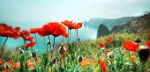 meadow with red poppy flowers against sky and sea