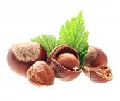 picture of hazelnut  - Hazelnuts isolated - JPG