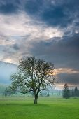 single tree at sunset standing in meadow