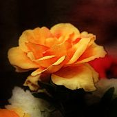 art floral vintage vibrant background with orange roses