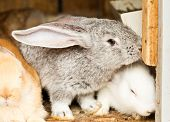pic of rabbit hutch  - Three different rabbits closeup in hutch close up - JPG