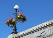 Lamppost & Flowers