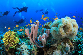 pic of biodiversity  - Scuba Diving over Coral Reef with Fish underwater in ocean - JPG