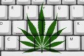 Searching For Marijuana Information