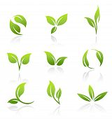 Collection of vector icons of green leaves.