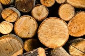 picture of firewood  - Firewood stack - JPG