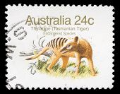 AUSTRALIA - CIRCA 1981: A stamp printed in Australia shows Tasmanian Tiger, circa 1981