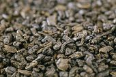 gunpowder green tea, moroccan, shallow dof