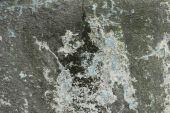 Fungus, Concrete