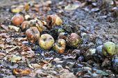 Rotten Fruits