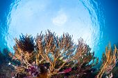 Corals in the tropical sea. Indonesia