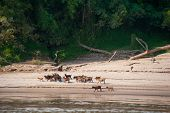 Mekong River Cruise in Laos. Popular tourist adventure trip by slow boat from Huay Xai to Luang Prab