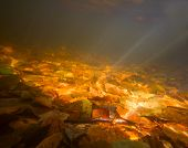 Autumn Underwater On The Lake
