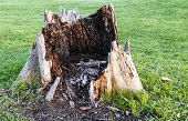 pic of manicured lawn  - Ugly rotten stump in the middle of a manicured lawn - JPG