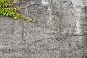 Concrete Wall With Green Ivy - Background