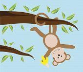 Monkey Swinging in Tree