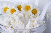 Curd And Flower Camomile
