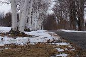 Winter fading away