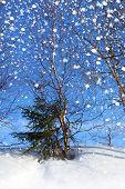 Winter Nature, snow