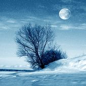 Winter Nature, Moon And Tree