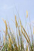 White Reeds Field