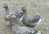 Fun flock of grey