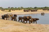 Several Heard Of African Elephants At Waterhole