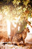 foto of yellow tabby  - Beautiful tabby cat sitting and resting under the tree in sunset light - JPG