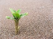Plant In The Sand