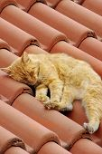 Small Kitty Sleep On Roof Tilesmall Kitty Sleep On Roof Tile